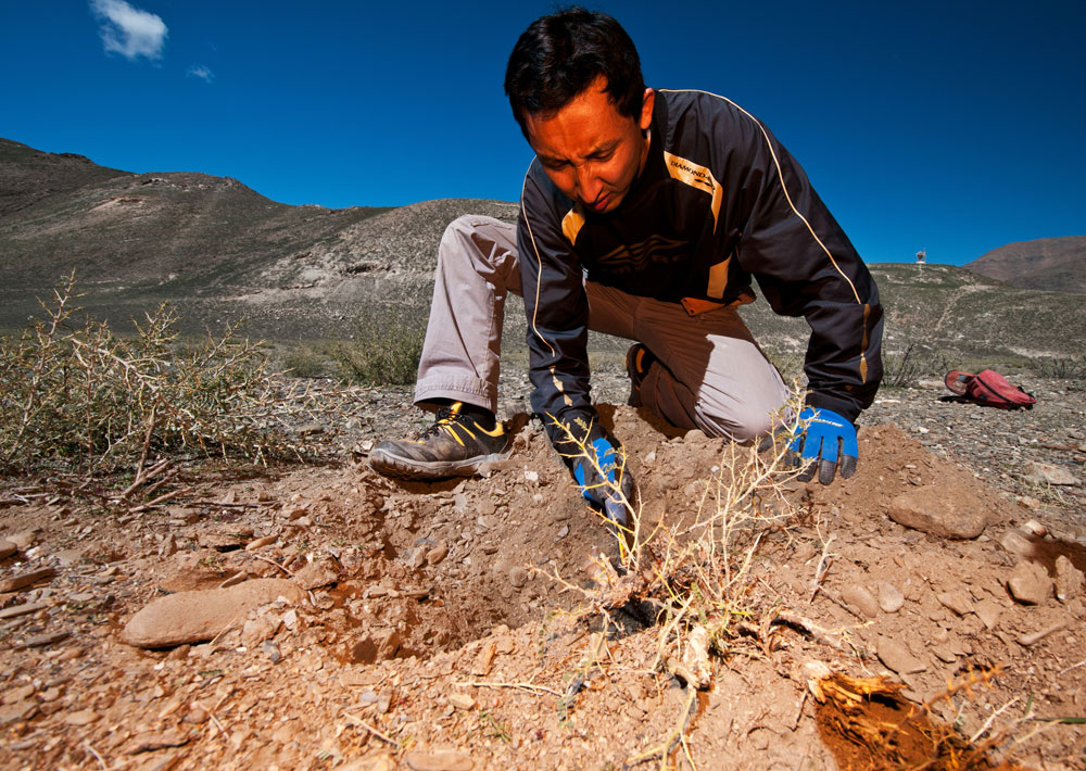 Figure 9. Ahmadjan Abduriyim carefully excavating beneath a bush in lower Yu Lin Gu valley, near Zha Lin village in Tibet's andesine mining district. While many were skeptical of the existence of Tibet's andesine mines, the andesines found under this bush proved beyond doubt that the mines are genuine. Photo: Richard W. Hughes